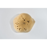 Hortus Medicus In time sponge perioodi tampoon merekäsnast